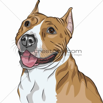 vector dog American Staffordshire Terrier breed smiles