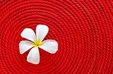 Flower on roll red rope