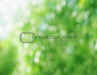 Beautiful natural bokeh