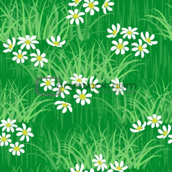 camomile on green grass field seamless background pattern