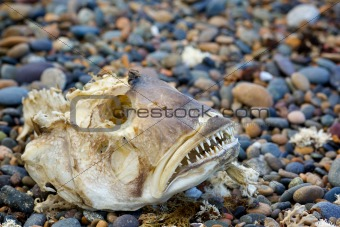 Skeleton big fish