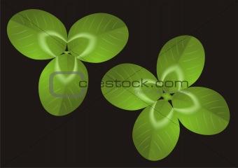 Green Clover vector