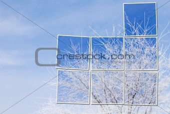 White tree in snow over blue sky