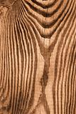 Wooden cutting board. Sepia
