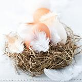 Eggs and Feathers in a Easter Nest