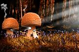 Fantasy image of toadstool houses in bluebell woods