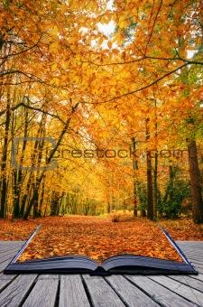 Creative concept idea of Beautiful Autumn Fall forest scene in p