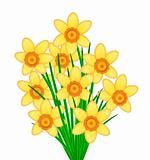Yellow Daffodil Flowers Bunch
