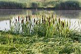 fishing on green reed