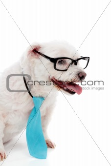 Business educated dog