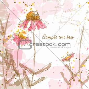 Romantic vector background with echinaceas