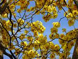 Yellow flowers & Blue sky