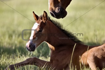 Colt newborn in field