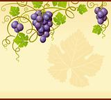 Vector grape frame