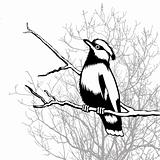 bird silhouette on wood background, vector illustration