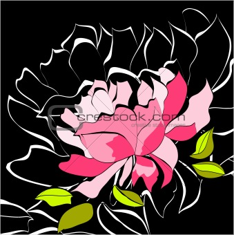 Decorative background with peony flower