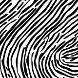 Skin of a zebra