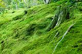 Moss on forest floor