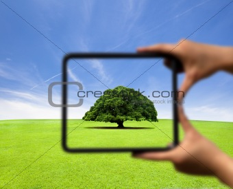 hand holding frame and focus on the tree