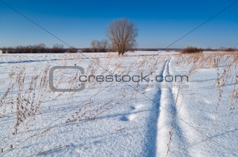 winter landscape of the field