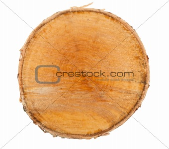 Cross section of tree stump