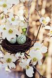 Springtime Eggs and Nest