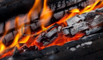 Fire close-up view