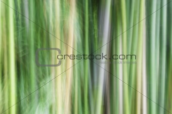 Abstract of bamboo