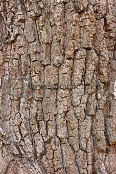Fragment of old tree bark