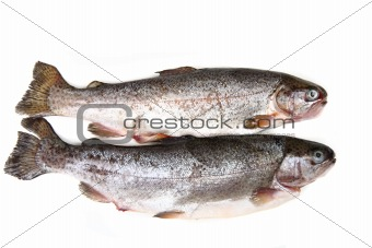 raw trout fishes