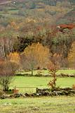 Autumn trees and meadows