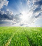road in green barley under sun