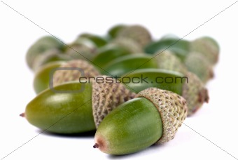Heap of green acorns isolated on white background