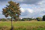 Mountain ash tree on meadow and Russian town Suzdal on horizon