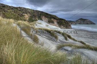 Coastal Grass