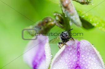 bee in macro green nature