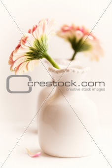 Simple Still Life with Gerbera Daisies