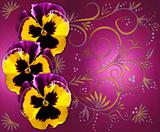 Pansies on magenta background with swirls