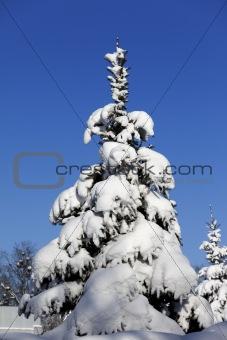 Snowy fir on background of blue sky