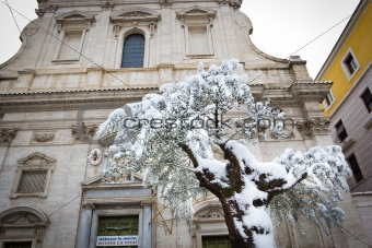 Olive tree covered in snow in front of the church of Santa Maria