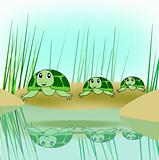 Turtle Family