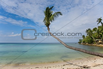 sea and beach with coconut palm