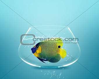 angelfish in small bowl