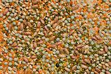 Variety of pulses essential for human life
