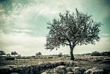 Tree Vintage Style