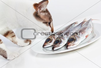 Cat smelling a fish on the table. In the kitchen.