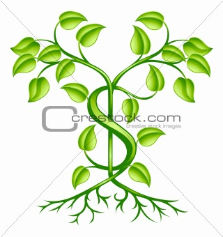 Cash money plant growth concept