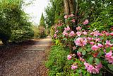 Beautiful park with azalea flowers in the Springtime