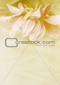 Beautiful vintage background with dahlia