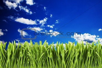 Green grass against cloudy sky